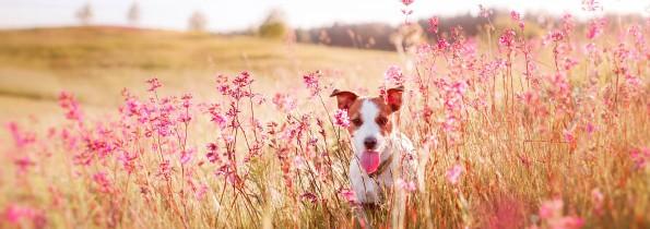 Alergie roślinne