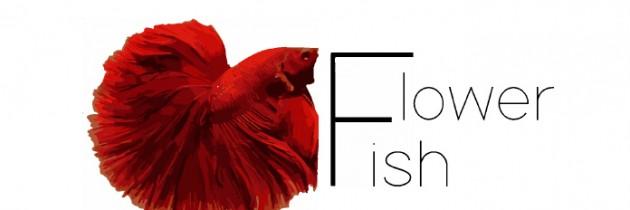 Sklep miesiąca Flower Fish
