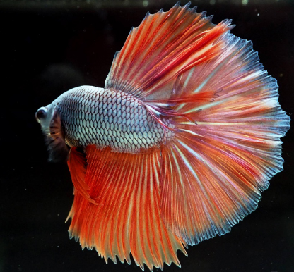 rybaryba