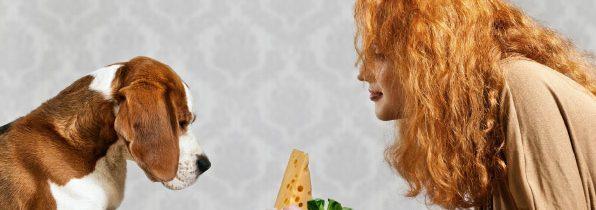 Rola tłuszczu wżywieniu psów