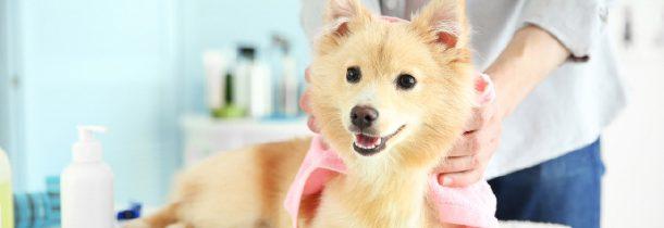 Funkcje olejów roślinnych wkosmetykach dla psów