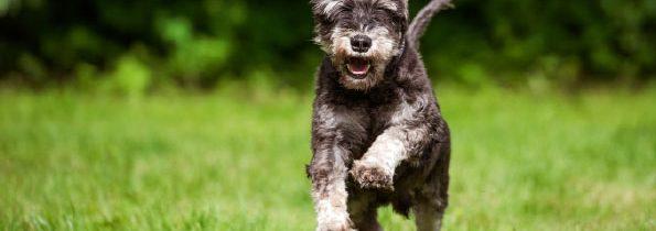 HMB – dbaj o mięśnie psa a przedłużysz mu życie