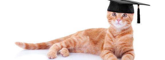 Wjaki sposób można szkolić koty?