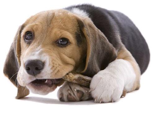 Psia kość! Przysmaki naturalne dla psów