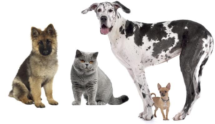 """Karmy """"rasowe"""" dla psów ikotów – coś więcej niż tylko marketing?"""