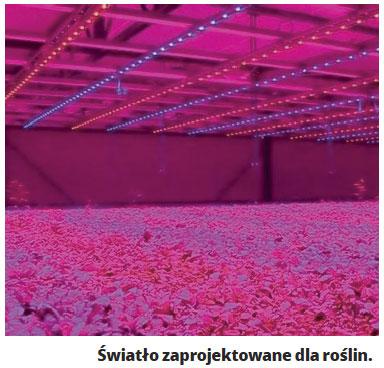 Lumeny Par Czy Ra Jak Dobrać światło Do Akwarium Cz 2
