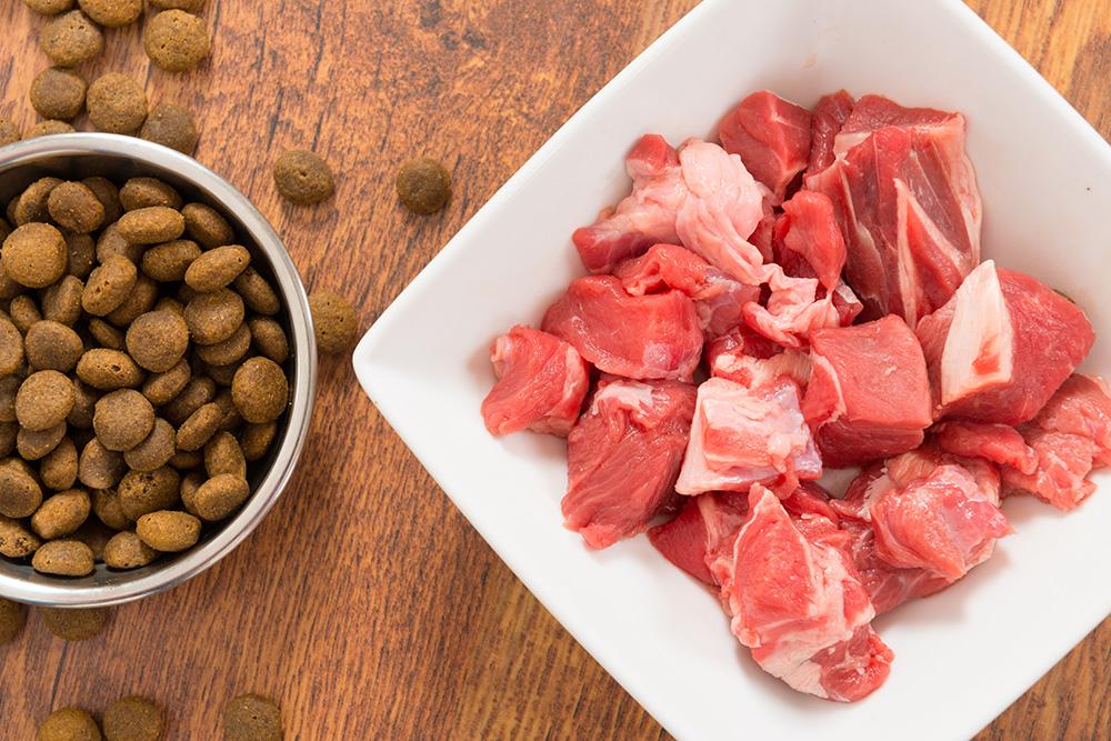 Sucha karma ze świeżym mięsem czy to się da pogodzić?