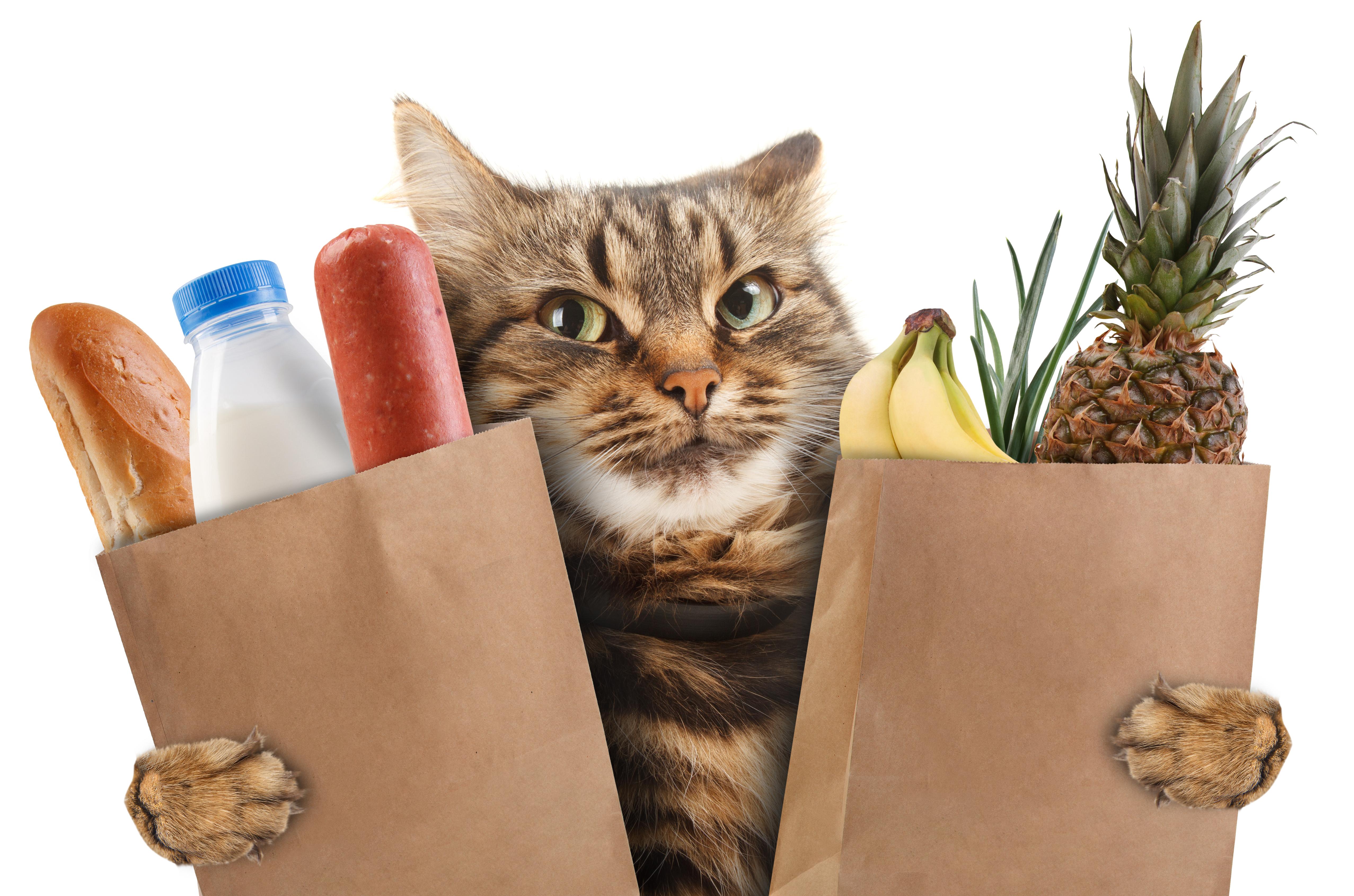 Mięso to nie wszystko – dodatki roślinne wkarmach dla kotów