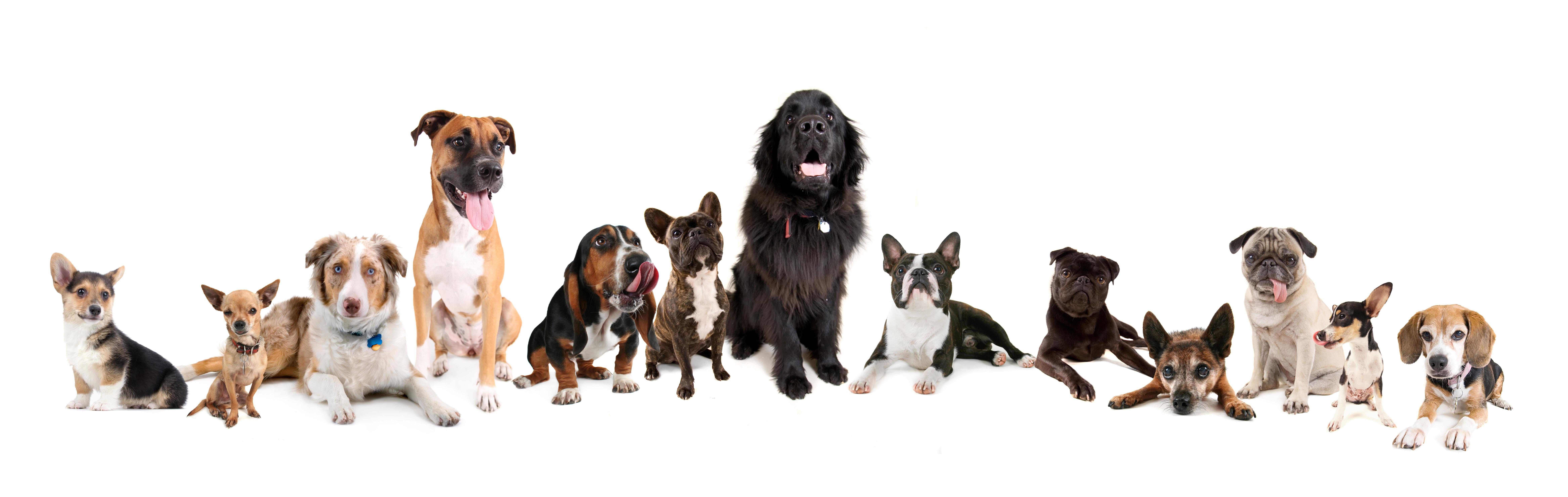 Jak dobrać  optymalny pokarm dla psa? Czyli 8 pytań, które klient musi od Ciebie usłyszeć
