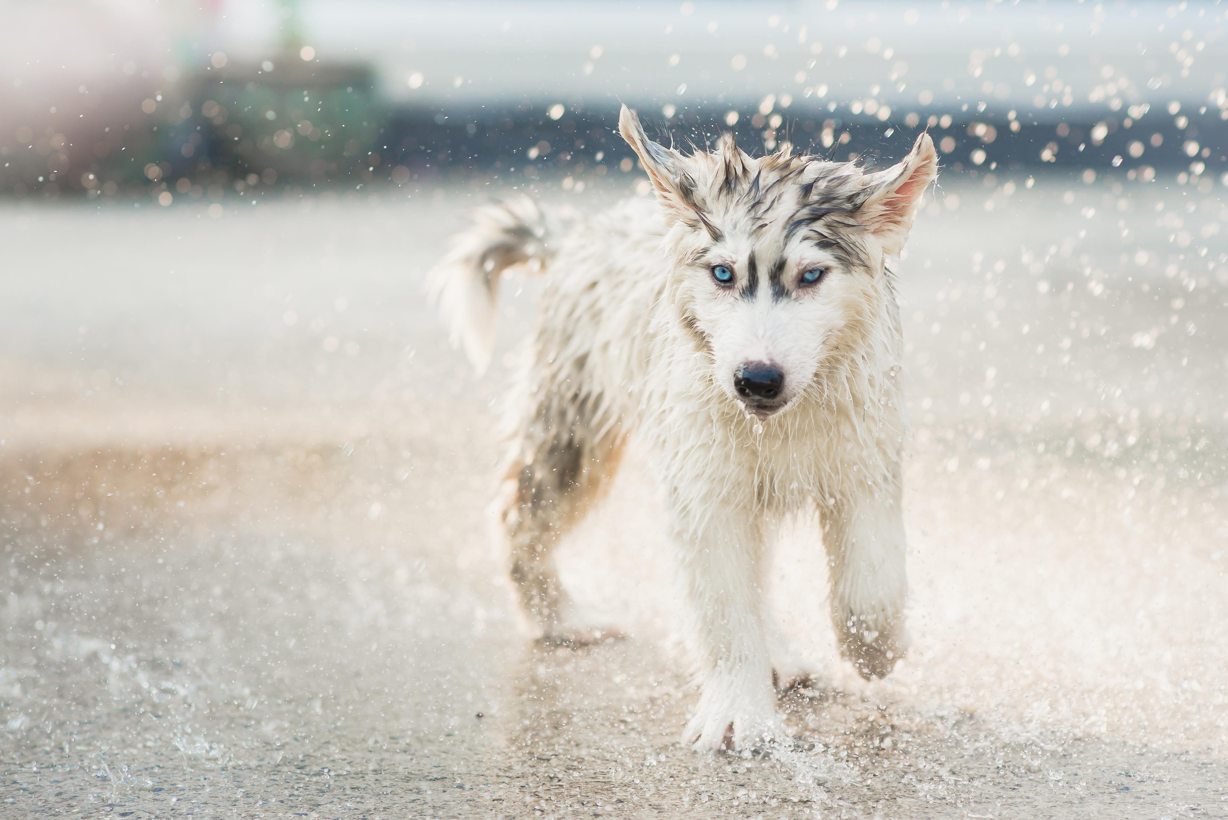 Preparaty na odporność dla psów ikotów