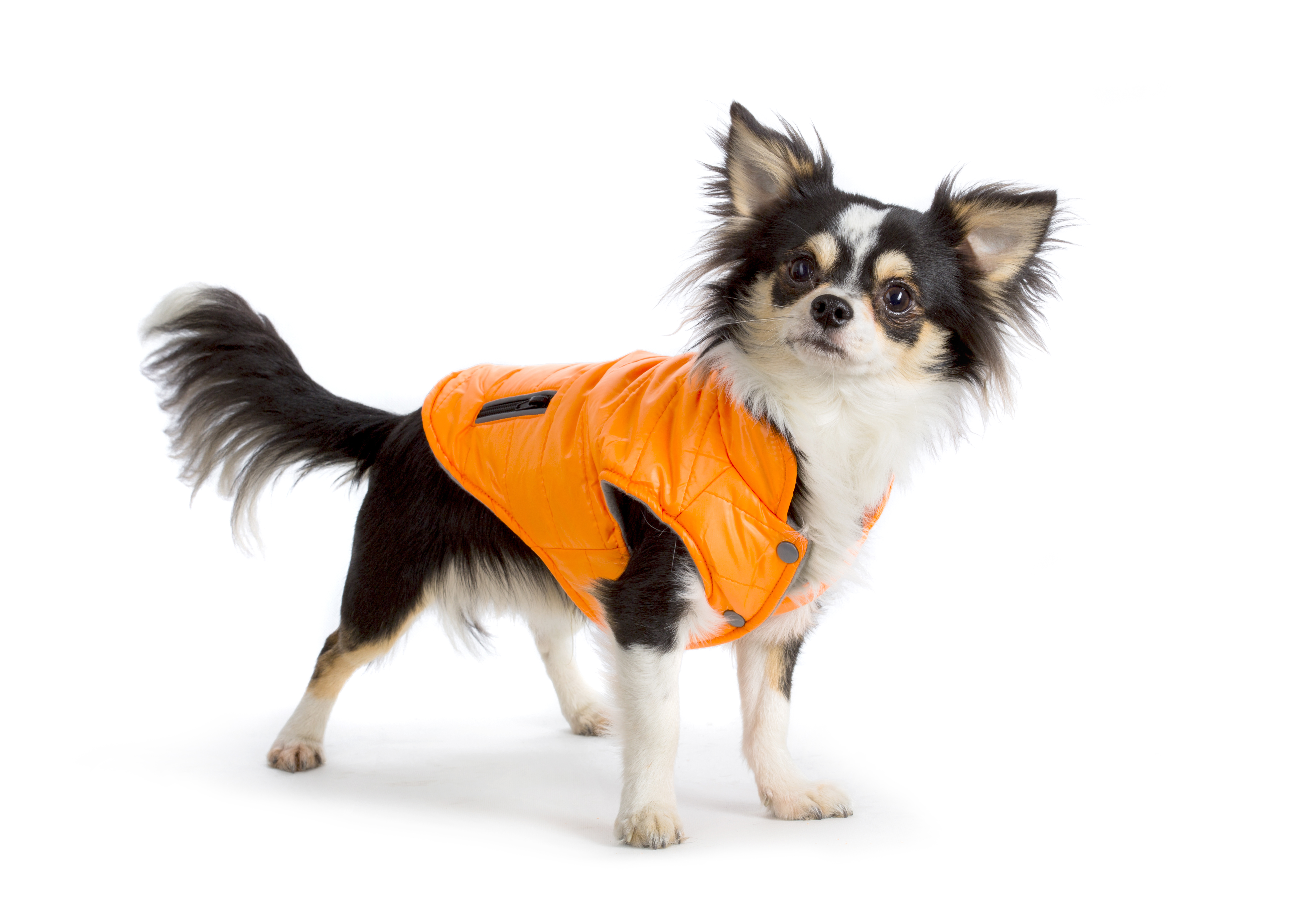 Eleganckie ubranka dla psów w ofercie COMFY!