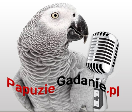 """III Międzynarodowe Mistrzostwa Polski Ptaków Gadających """"Papuzie Gadanie"""" 2015/16 rozstrzygnięte!"""