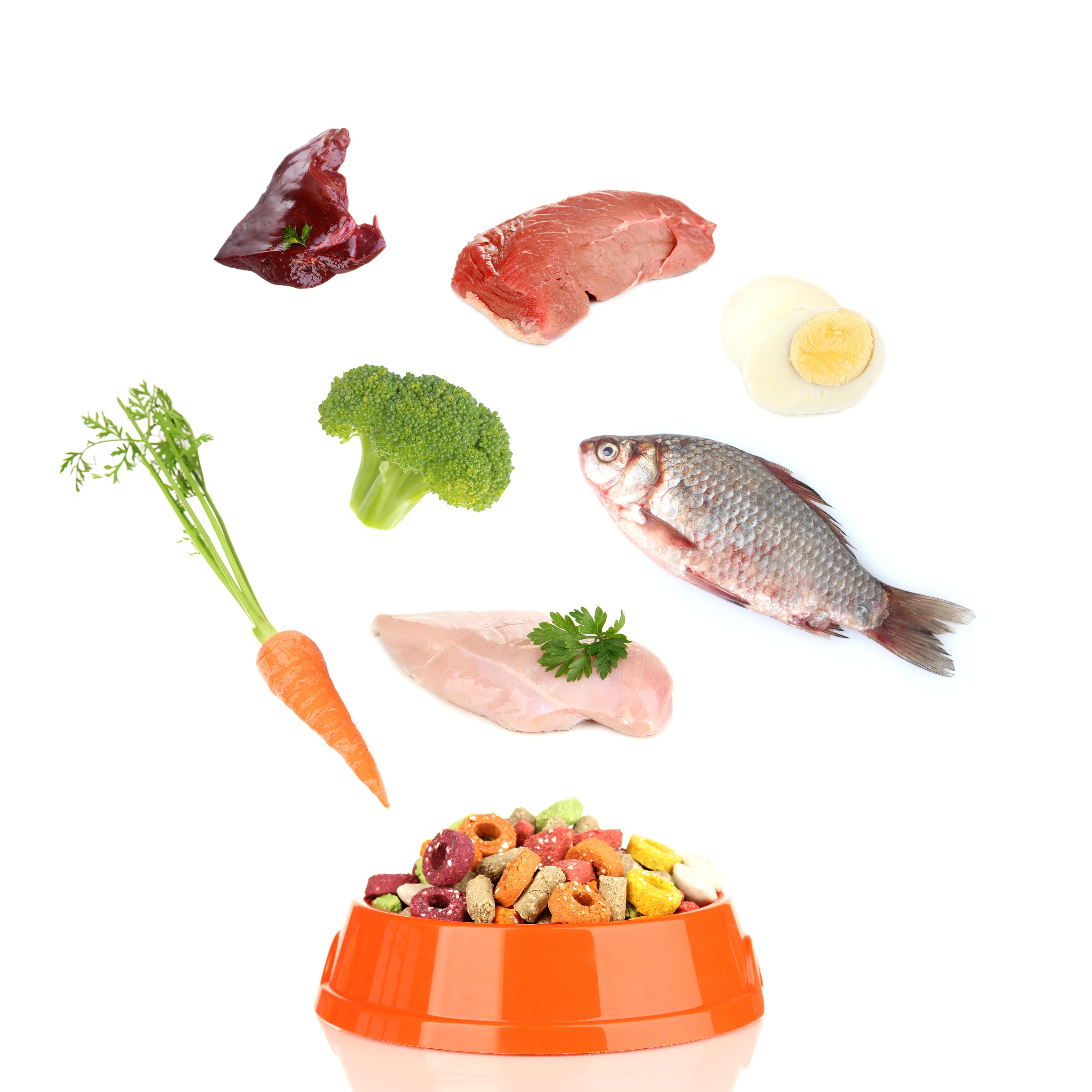 Białko wkarmach  ważny składnik diety psów ikotów
