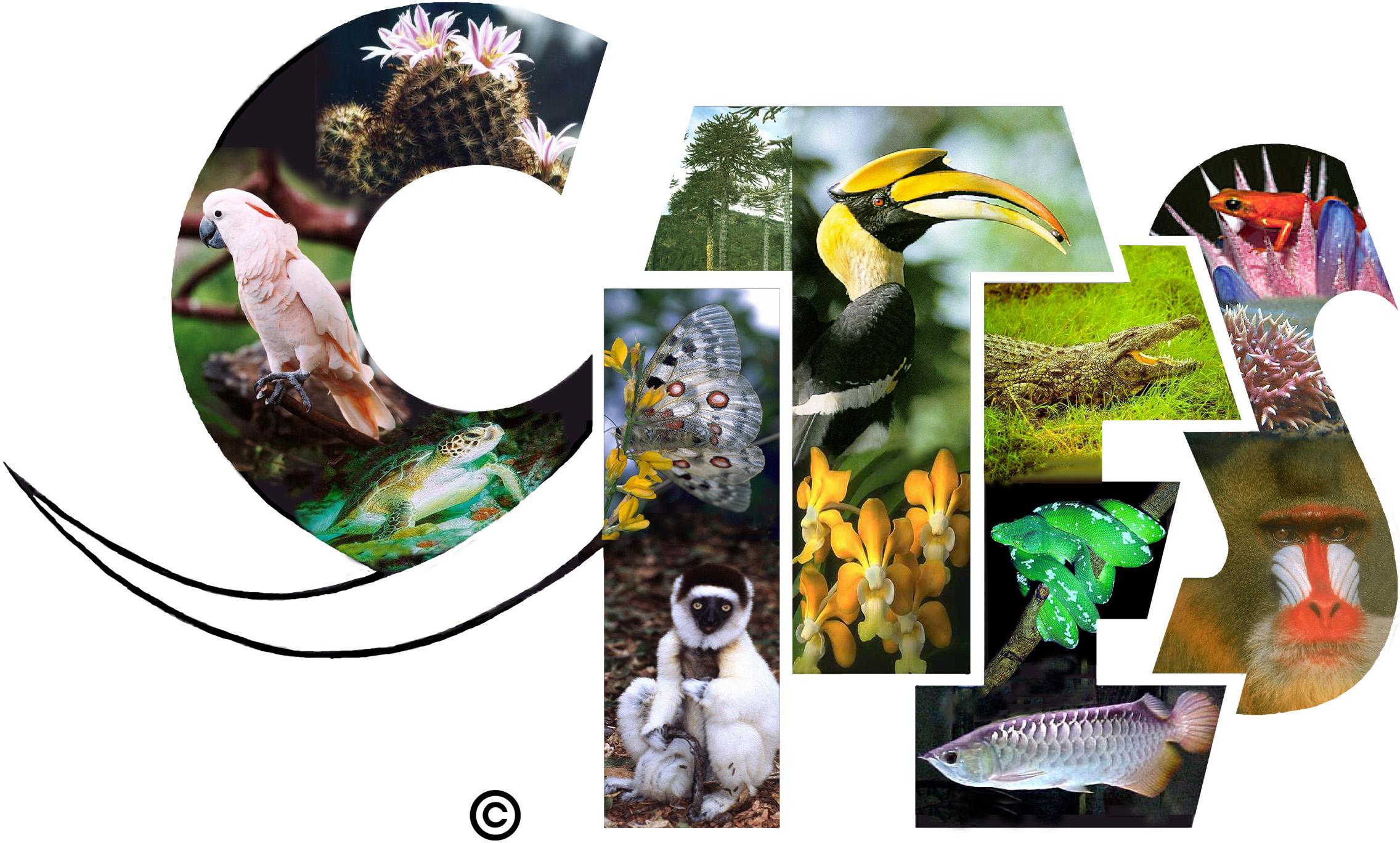 Zmiany  wprzepisach oochronie gatunków wdrodze regulacji handlu (CITES)