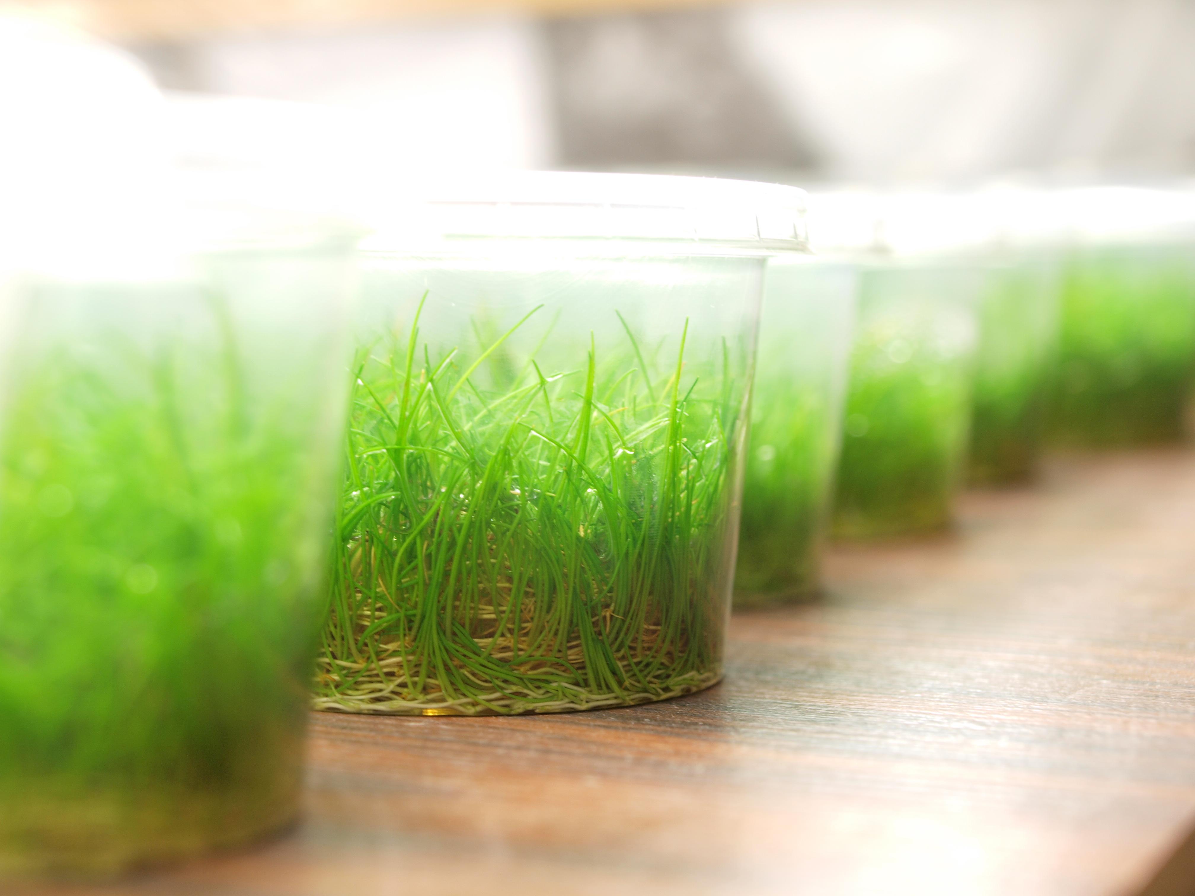 Rośliny akwariowe in vitro – dlaczego warto polecać je klientom?