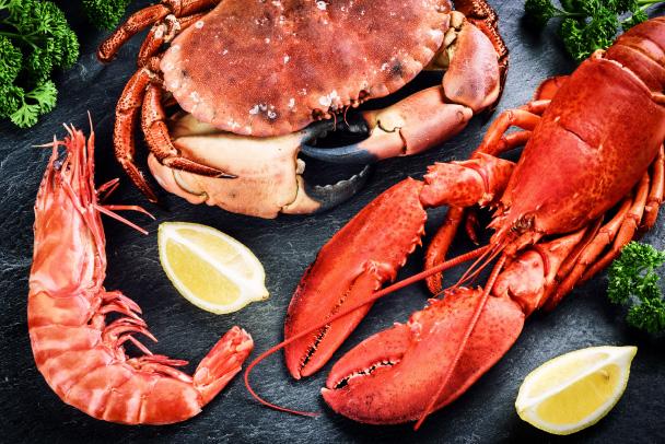 Nie tylko ryba – jakie inne organizmy morskie stosuje się  wkarmach isuplementach dla psów?