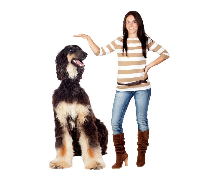 Jak dbać ostawy psów dużych ras?