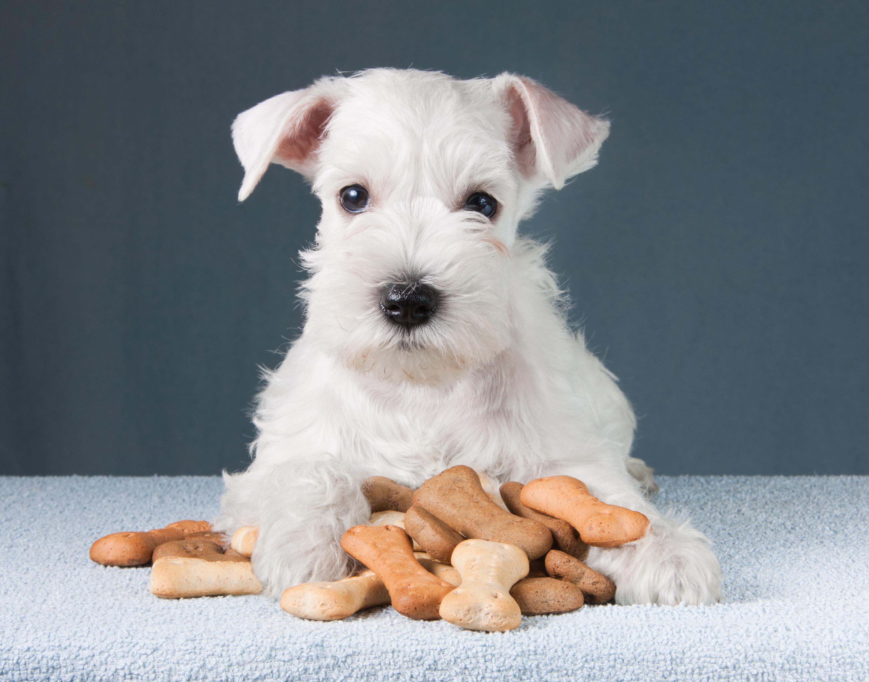 Jak skutecznie  sprzedawać przysmaki dla zwierząt?