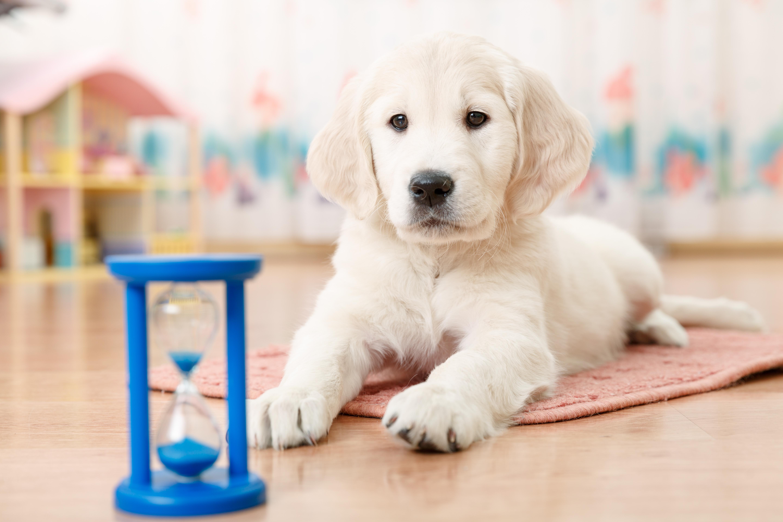 Spiesz się powoli. Jak chronić psa przed łakomstwem?