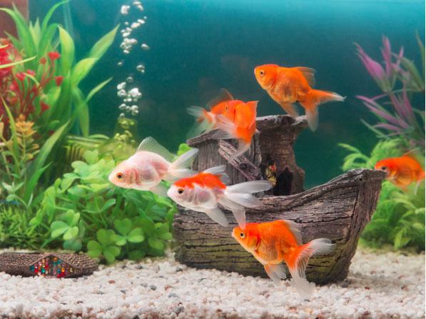 Co grozi akwarium wczasie lata?