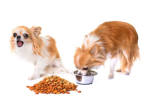 Specyfika potrzeb żywieniowych psów miniaturowych