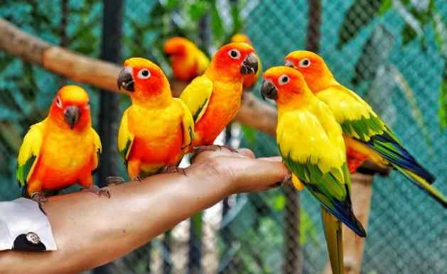 Ornitoza, czyli kiedy ptaki mogą być niebezpieczne