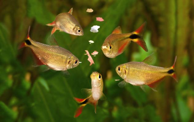 Nie tylko białko – dodatki funkcjonalne wpokarmach dla ryb