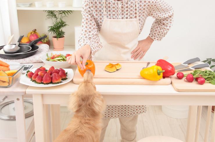 Witaminy izwiązki mineralne wkarmach dla psów