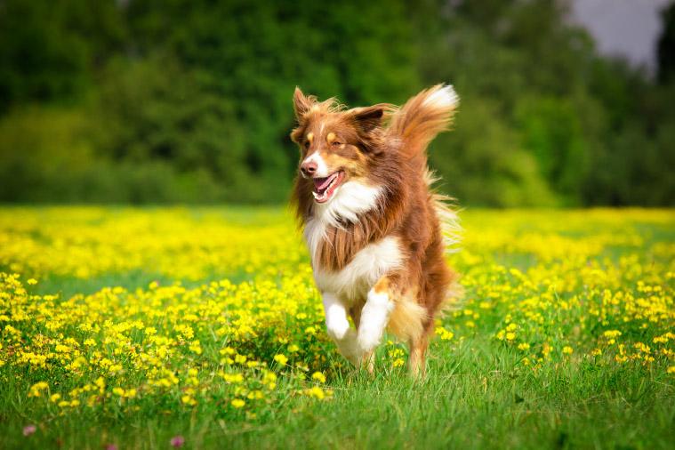 Suplementy diety dla psów aktywnych