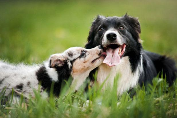 Od szczeniaka do seniora – Żywienie dostosowane do wieku psa