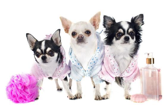 Kosmetyki dla zwierząt wrażliwych ialergików