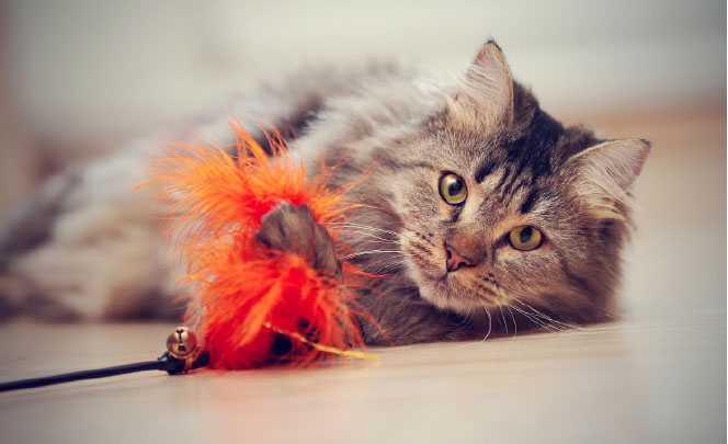Nie tylko karma iżwirek. Jak zarabiać więcej na sprzedaży produktów dla kotów?