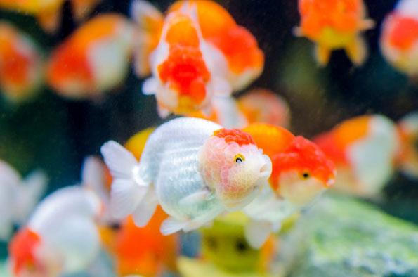 Choroby ryb wsklepie zoologicznym (cz. 1)