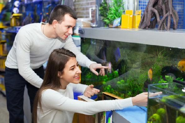 Ryby wsklepie zoologicznym. Estetyka i… merchandising