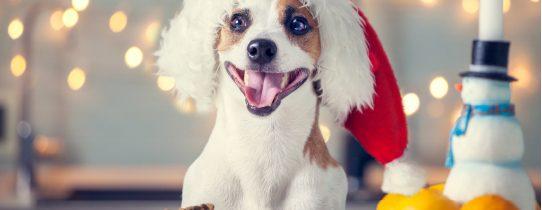 Jak sprzedawać przysmaki naturalne dla psów?