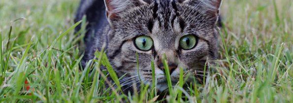 Dlaczego koty lubią myszy, czyli prawidłowa suplementacja kota wpigułce