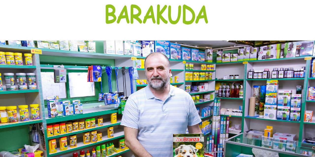 Barakuda
