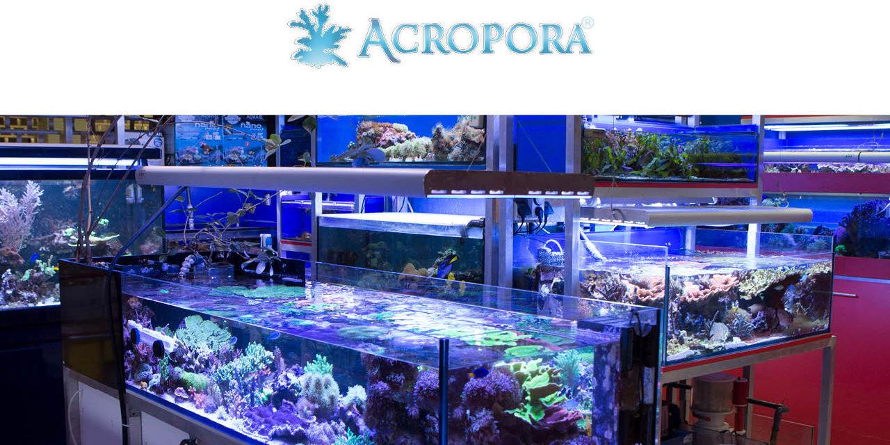 ACROPORA – salon akwarystyki morskiej