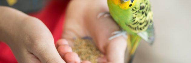 Wptasiej misce – Jak sprzedawać pokarmy dla ptaków?