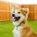 Zasady wyboru zdrowej karmy dla psa