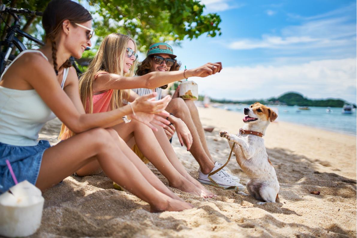 Dirofilarioza iinne niebezpieczeństwa. Jak ochronić psa na wakacjach?