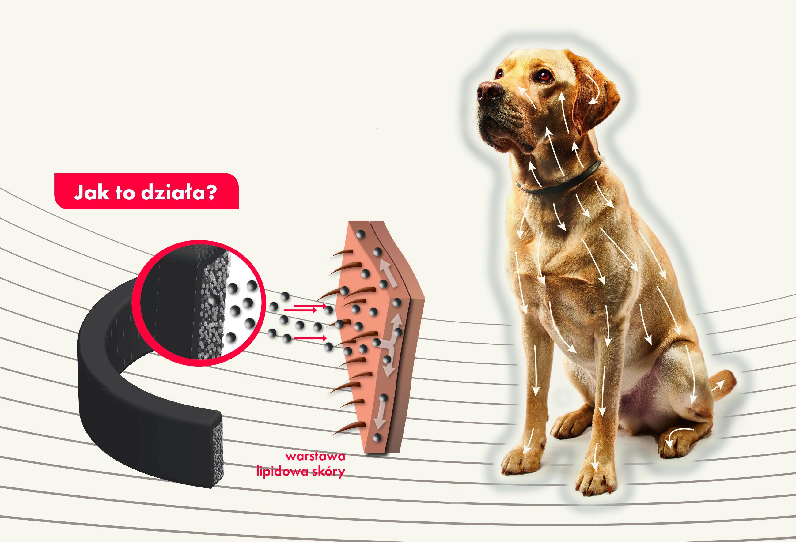 CANISHIELD – Wesprzyj psa w walce z pasożytami