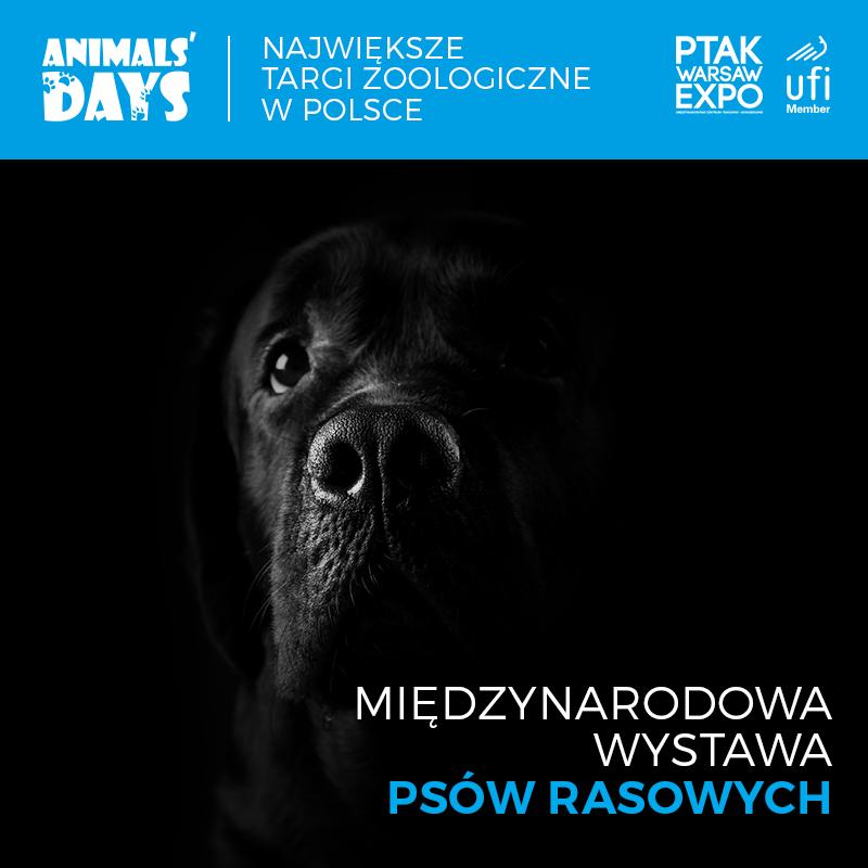 Trzy wystawy kynologiczne w Ptak Warsaw Expo podczas IV Edycji Targów Animals Days 3-5 kwietnia 2020
