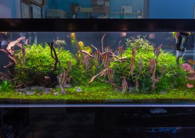 Plantica12019-0586