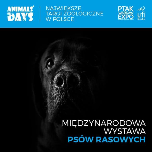 Trzy wystawy kynologiczne wPtak Warsaw Expo podczas Targów Zoologicznych Animals' Days 2020