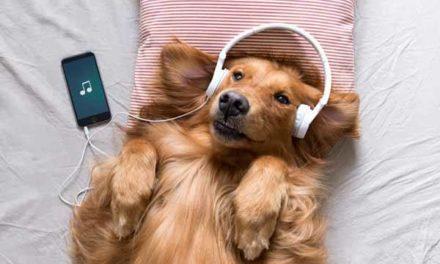 NOWOŚĆ! Playlista na Spotify dla zwierząt!