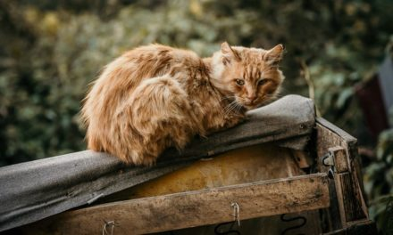 Wsparcie dla kotów wolno żyjących