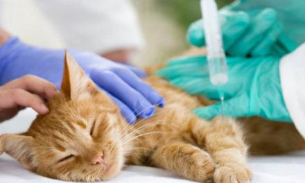 Choroby odkleszczowe kotów