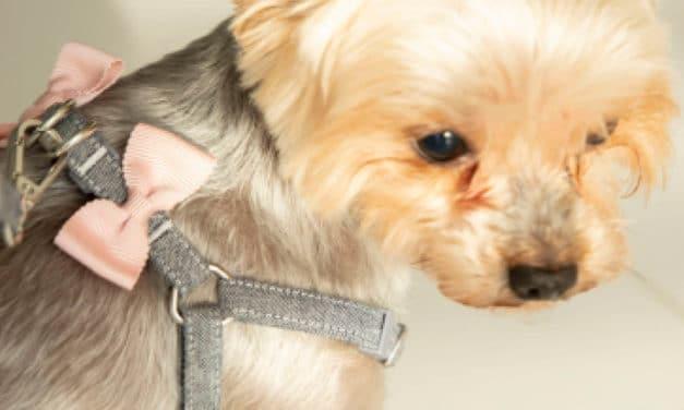 Linia ALLFORDOGS MINI – wtrosce onajmniejsze psy!