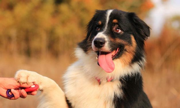 Szkolenie psiego juniora. 7 produktów, bez których nie można się obejść!